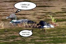 Nesting site 8